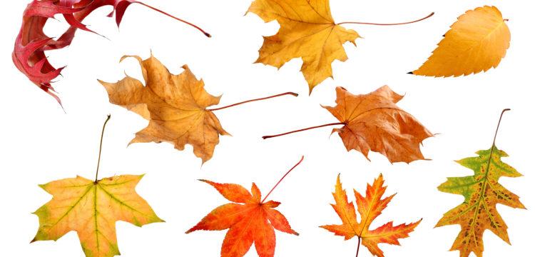 Les feuilles : une mine d'or pour votre compost !
