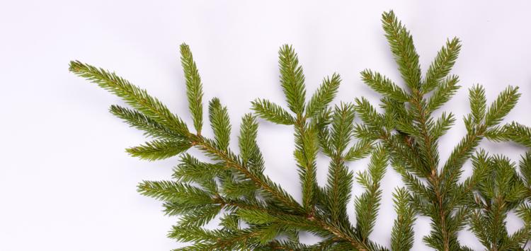 Jetez votre sapin de Noël lors des collectes de végétaux !