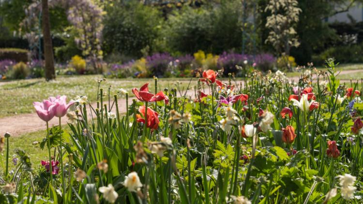La Ville au service de la biodiversité pour l'obtention du label «4 fleurs»