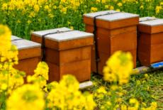 Le Vésinet s'engage pour les abeilles et recense les apiculteurs amateurs
